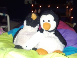 Penguin and Penelope. Penny's wing is bandaged.